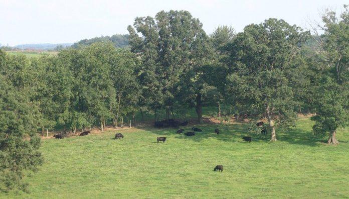 graze-pasture