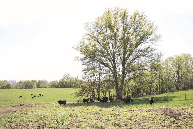 Bolender Farm