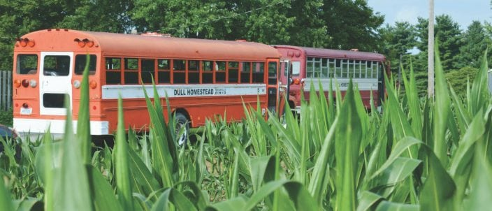 A couple bus loads of teen workers scour the corn fields looking for the tassels that farm equipment may have missed.