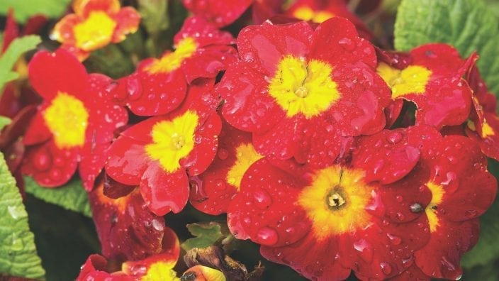 heiloom-blooms