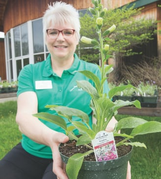 Kathy Styer is executive director of Adena Mansion & Gardens Historic Site in Chillicothe, where a popular heirloom plant sale is held each year.