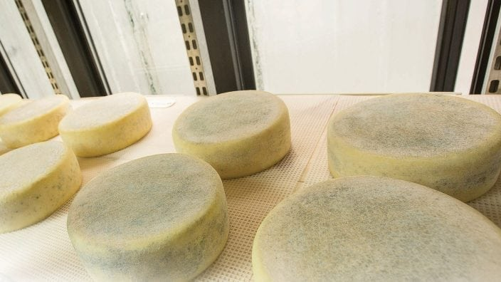 Aged Moncaito cheese sits in the cheese cave for minimum of 60 days before it is ready.