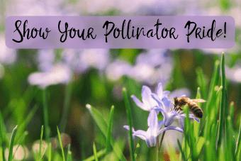 show-your-pollinator-pride