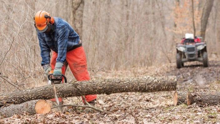 2019_clum-tree-farm-cutting-wood