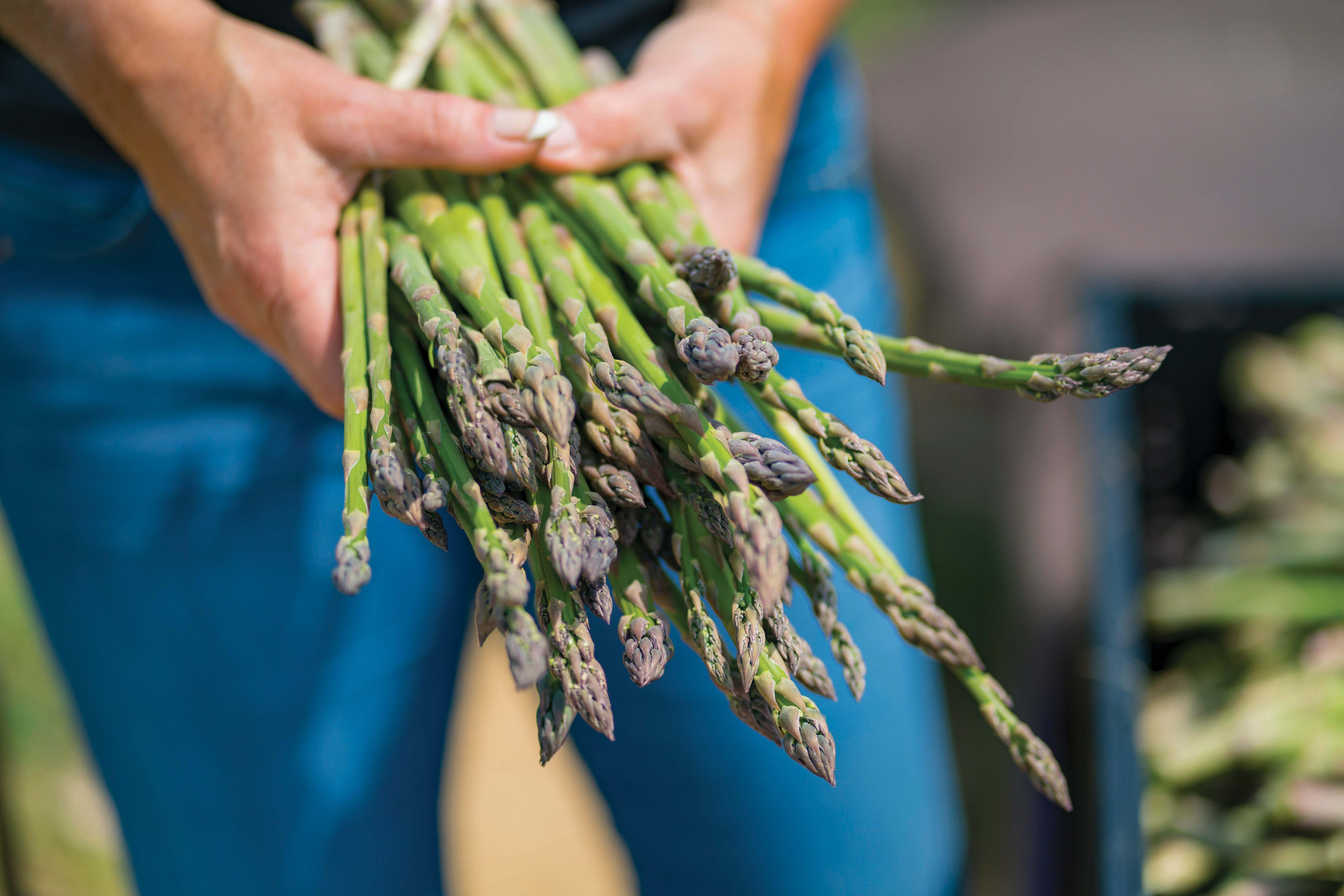 asparaguscover