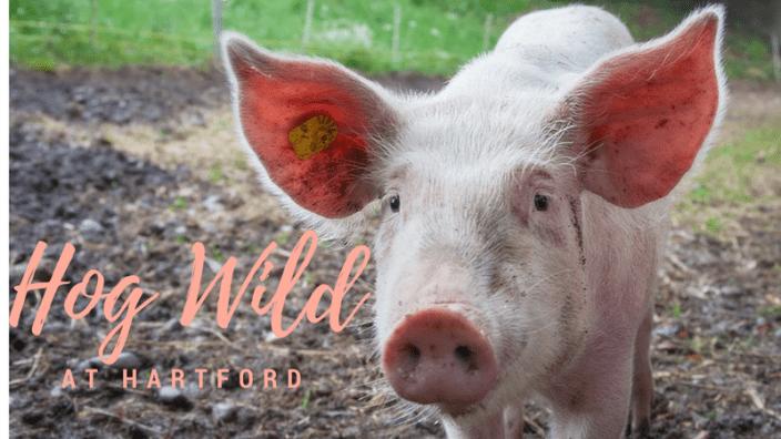 hog-wild