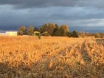 Dickey Farm, Henry County