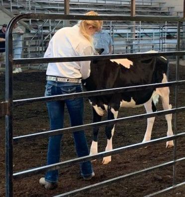 monroe-dairy-calf