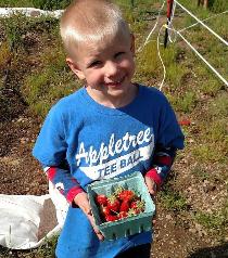 Morrow strawberries